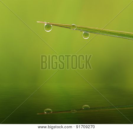 Dew Drops On Grass  Reflection In Water