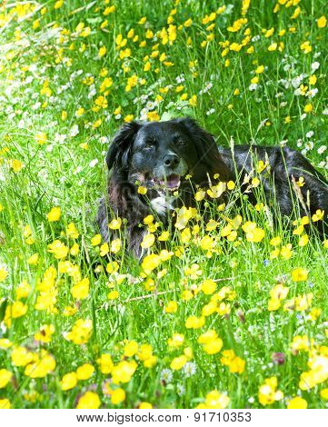 Dog Lying On A Meadow