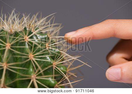 Touching Cactus