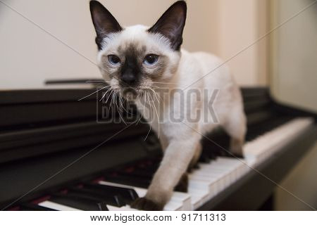 A Graceful Catstrut On The Keyboard