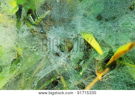 Dew Drops On Nest