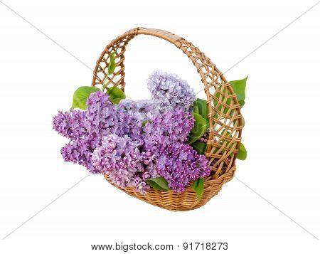 Beautiful Lilac Flowers In Basket