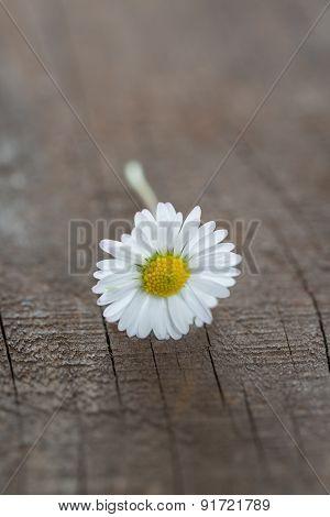 Daisy On Wood