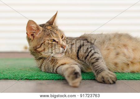 Stray Sleeping Tabby Cat Lying On Green Mat Copyspace