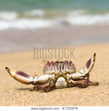 Funny Crab Cute Animal