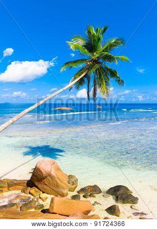 Horizon Palms Coconut