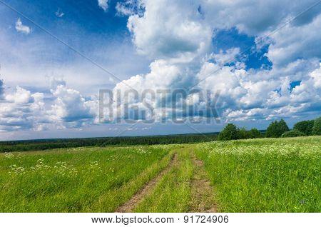 On a Country Lane Acres Wild