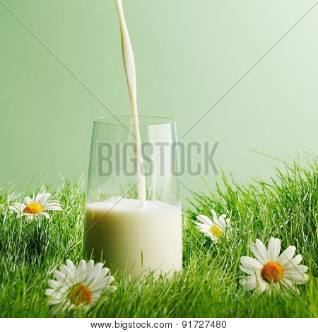Pouring milk in a glass standing on flower field