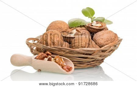Walnuts in scoop and basket