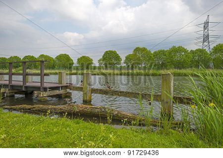 Ducks on a jetty near the shore of a canal in spring