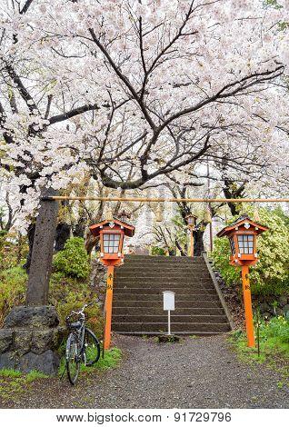 Bicycle at way up to the chureito pagoda