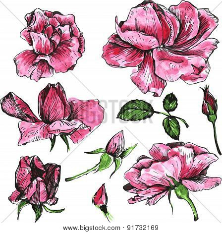 watercolor vector floral set