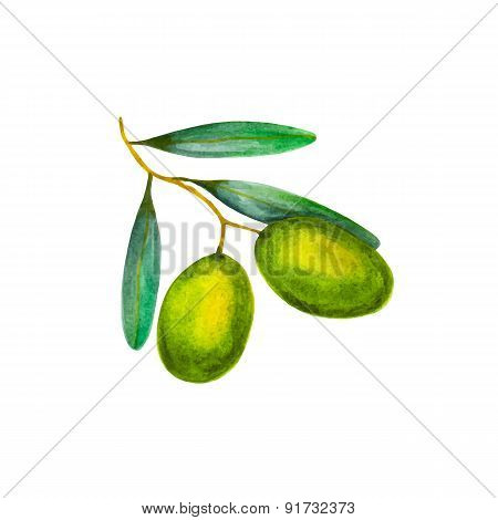 Realistic watercolor illustration olives isolated on white background vector