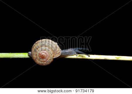 Snail on a tree in the forest.