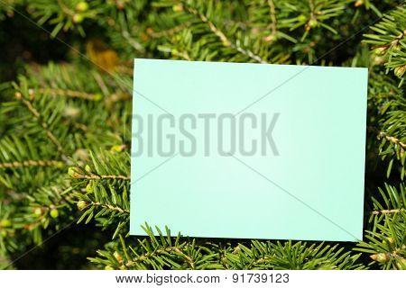 Blank card on tree outdoors