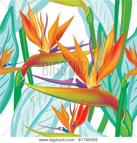 Seamless floral pattern with Strelitzia on white