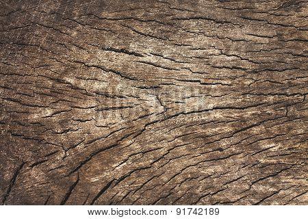 Cut tree trunk, close-up