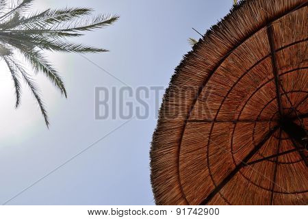 parasol and palm tree