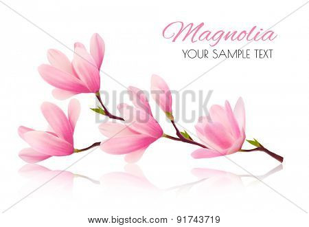Flower background with blossom branch of pink magnolia. Vector