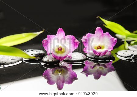 still life with pebble and with orchid blossom