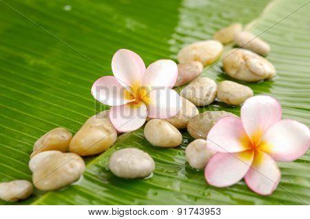 Pile of stones and frangipanion wet banana leaf