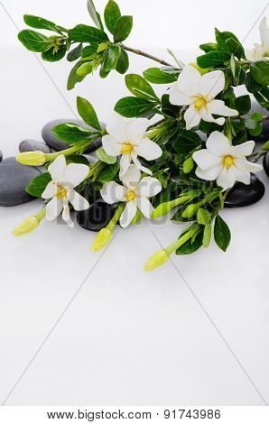 Lying down branch gardenia with therapy stones