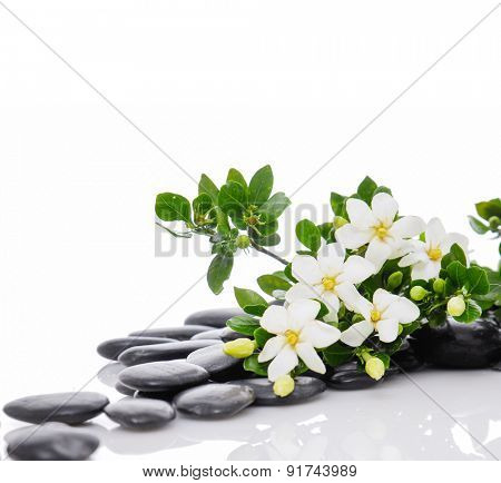 Still life with three white gardenia with therapy stones