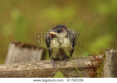A nestling bird profile. The Leningrad Region, Russia