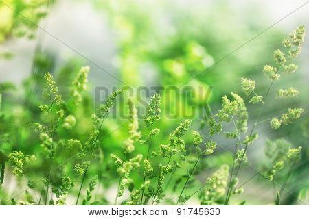 Beautiful high spring grass