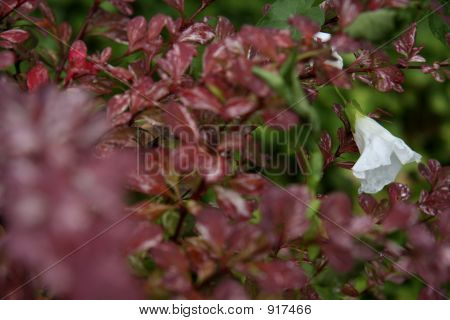 White Bell Flower In A Sea Of Red Leaves