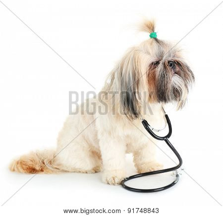 Cute Shih Tzu with statothcope isolated on white