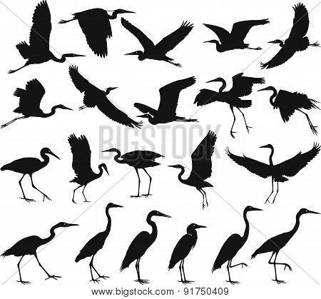 Bird - Herons.eps