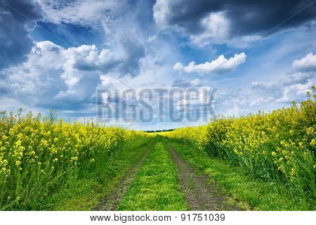 Summer landscape, yellow rapeseed field and road