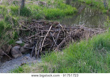 Beaver Dam At A Small Creek