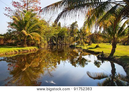 Natural Background - Palm Trees Grow On The Bank Of A Pond. Cuba.