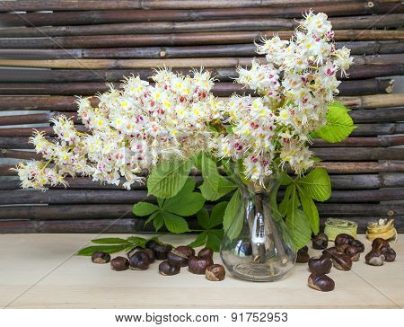 Chestnut Flower In A Vase. Seed