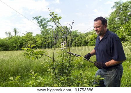 Farmer Pruning A Apple Tree