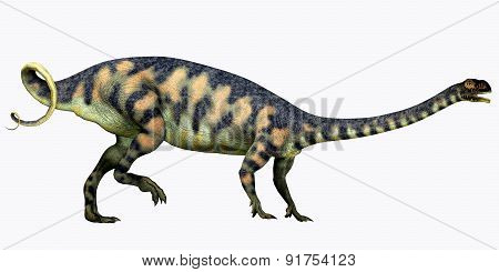Massospondylus On White