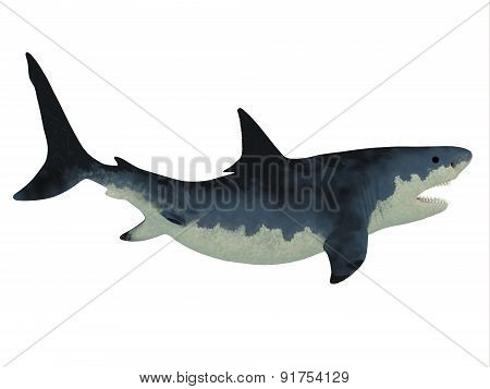 Megalodon Shark Over White