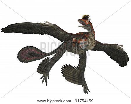 Microraptor Dinosaur Profile