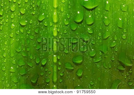 green leaf with drops of water, vector