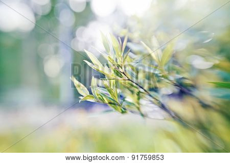 Willow Branches On Blurred Background With Bokeh.
