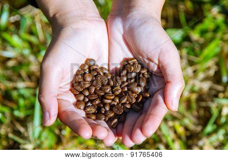 coffee beans heart on agriculturist hand