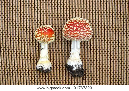 Two Mushroms Amanita Muscaria On Table