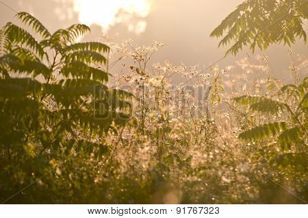 Summer End Dewy Morning Grass And Mist Fog Background