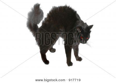Halloween cerda gato preto 2