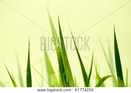 Photo Of Nice Grass For Background