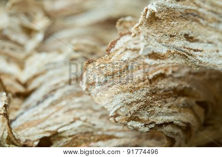 Wasp Nest Texture Background