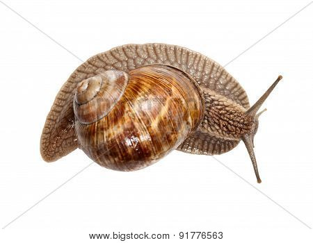 Top View Of Snail