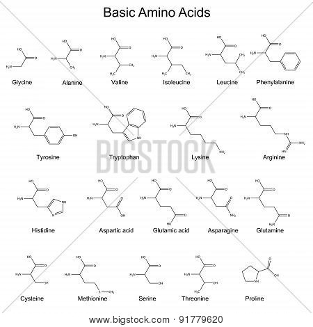 Skeletal Strutures Of Basic Amino Acids